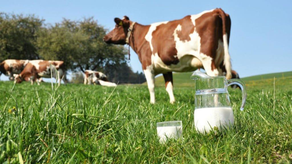 The Amazing Benefits Of Raw Milk